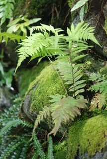 mosses ferns liverworts and horsetails science activities