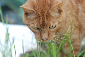 cat with grass