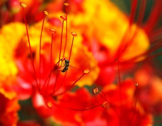 Bug of the week the story of a plant growing with science blog those are the male parts of the flower called the stamens at the tip of each stamen the stalk is called the filament is the anther which produces the mightylinksfo